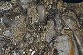 Auriferous brecciated quartz-adularia rhyolite (Sleeper Rhyolite Gold Ore, Nevada) 2 (14739423003).jpg