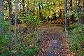 Autumn (190229041).jpeg