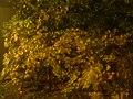 Autumn - 67 (2009). (16277365428).jpg