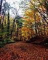 Autumn Belgrad Forest 1.jpg