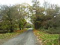 Autumn Colours on the small road - geograph.org.uk - 1571017.jpg
