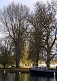 Avenue of trees to Christchurch College - geograph.org.uk - 1253073.jpg