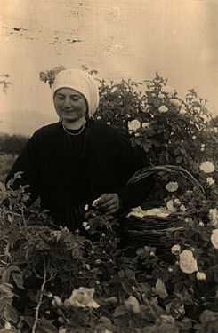 BASA-1323K-1-46-20-Rose harvests in Bulgaria.JPG