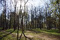 Balashikha, Moscow Oblast, Russia - panoramio (204).jpg