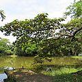 Balso Tambor en el lago de la Universidad del Valle.jpg