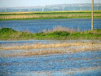Balta Ialomiței - Image: Balta Ialomiţei flooded 02 bgiu