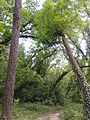 Banjička šuma 011.jpg