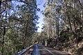 Bargo NSW 2574, Australia - panoramio (2).jpg