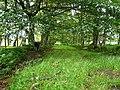 Barns Plantation - geograph.org.uk - 887742.jpg