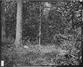 Battlefield of Atlanta, 1864, July 22, where Gen. McPherson was killed - NARA - 528859.tif