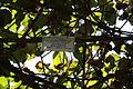 Batumi Botanical Garden (20).jpg