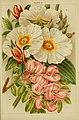Beautiful flowering trees and shrubs for British and Irish gardens (1903) (20172172219).jpg