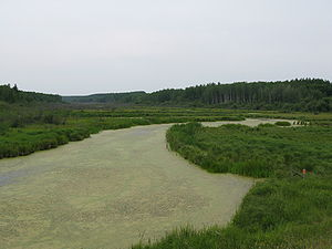 Beaver River (Canada) - The Beaver south of Lac La Biche, Alberta