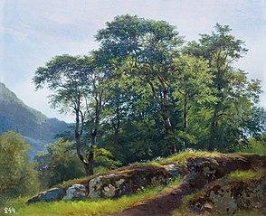 Beech Forest in Switzerland