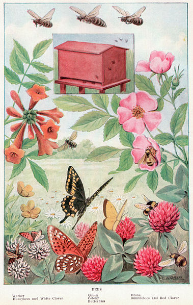 File:Bees Between pages 268 and 269.jpg