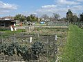 Bennetts Road Allotments - geograph.org.uk - 388121.jpg