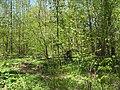 Bezhitskiy rayon, Bryansk, Bryanskaya oblast', Russia - panoramio (164).jpg