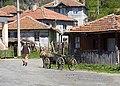 Biala-voda-Burgas-district.jpg