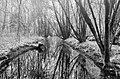Biotopo Fontanazzo 4.jpg