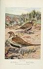 Bird-lore (1917) (14755377762).jpg