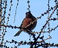 Birds14Slovakia1.JPG