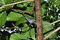 Birds (9774509243).jpg
