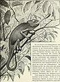 Blätter für Aquarien- und Terrarien-Kunde (1907) (20392789511).jpg