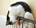 Black and White Cat on heater.jpg