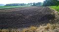 Black dirt in Black Dirt Region.jpg