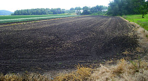 Chernozem - Chernozem field in Black Dirt Region of Orange County, New York, United States
