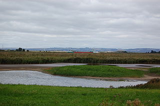 Blacktoft Sands RSPB reserve RSPB nature reserve in the East Riding of Yorkshire, England