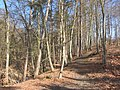 Blankenberg Wald Wanderweg 2014-03-11 7.JPG