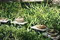 Bonsai - Jardim Botânico Tropical - Lisbon, Portugal - DSC06569.JPG