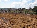 Borgis - panoramio.jpg