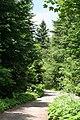 Borovets Bulgaria - panoramio.jpg