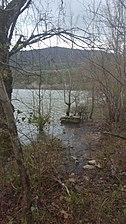 Bosque acuatico en la ribera del Ordunte.jpg