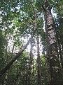 Bosque de Oncol.jpg