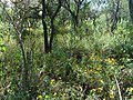 Bosque en La Avispas - panoramio.jpg