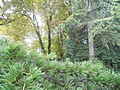 Botanička bašta Jevremovac 009.JPG