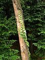 Botanička bašta Jevremovac 012.jpg