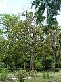 BotanicGardensPisa (3).JPG