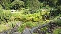 Botanischergartendresden-juli2016 - 33.jpeg