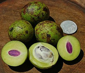 Bouea macrophylla - A young gandaria fruit in Java. Ripened ones are yellow-orange.