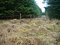 Boundary fence in the forest - geograph.org.uk - 113020.jpg