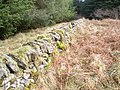 Boundary wall in Acharossan Forest - geograph.org.uk - 1706623.jpg