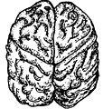 Brain Top.jpg