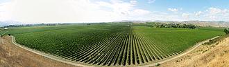 Brancott Estate - Part of the Brancott vineyards, Marlborough.