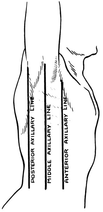 Axillary lines - The right side of the thorax with lines labeled