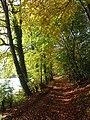 Bridleway, Hanger Wood, Fingest - geograph.org.uk - 1033965.jpg
