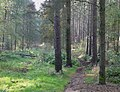 Bridleway across The Million east of Enville, Staffordshire - geograph.org.uk - 1006950.jpg